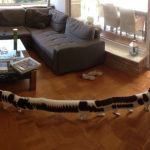 A Cat Walks Through a Panoramic Photo and Becomes a Hilarious, Many-Legged Cat-Centipede Creature