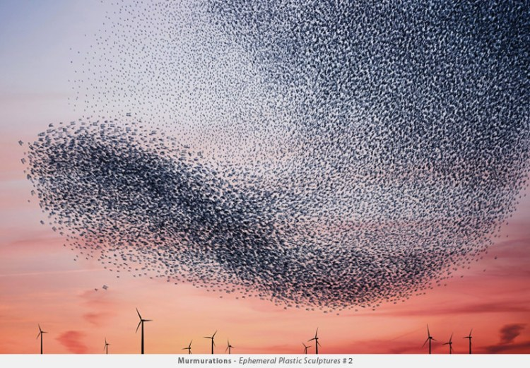 Plastic Bag Murmuration Photos Alain Delorme