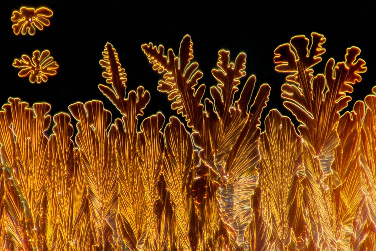 Microscope Photographs by Linden Gledhill