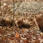 New Jersey Man and His Daughter Capture Adorable Photos of a Troop of Baby Foxes That They Found in Their Backyard