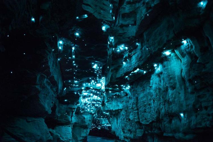 bioluminescent worms 4