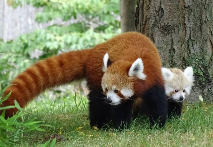 Mum and Tofu
