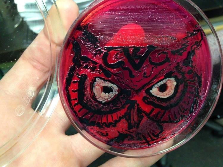 Salmonella Owl