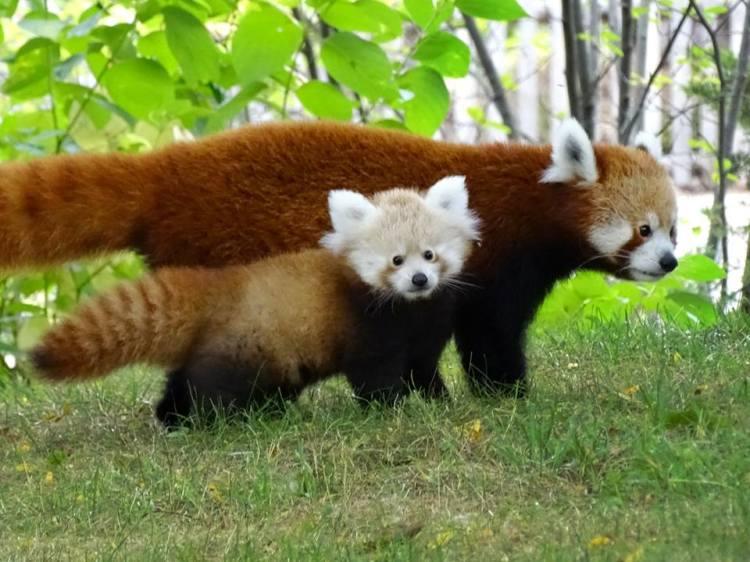 Tofu With Mum