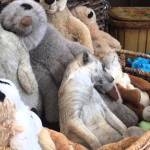 Drowsy Meerkat Struggles to Stay Awake Amongst a Basket Full of Plushy Versions of Herself