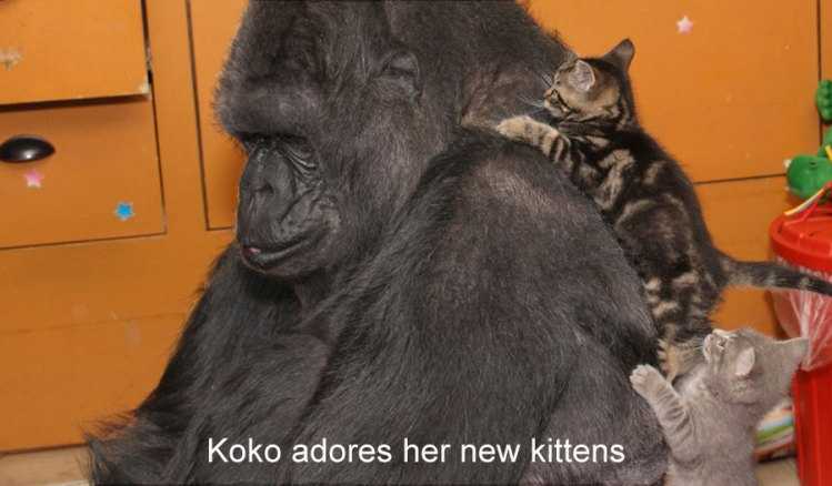 koko_with_2_kittens_on_back