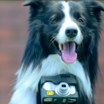 Dog Wearing a Heart Rate Monitor and Camera Snaps Photos When He Gets Excited