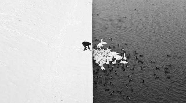 Black and white photo of man feeding birds