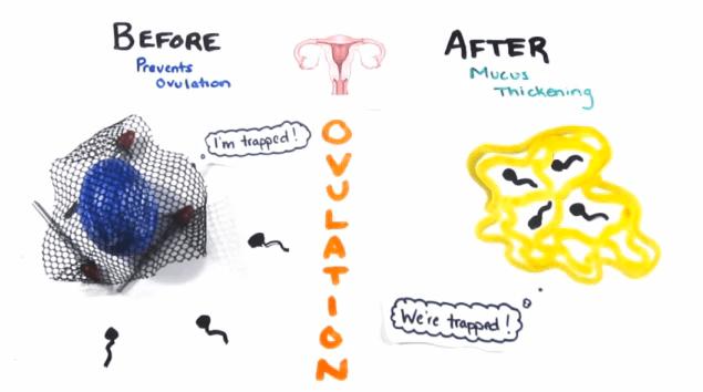Plan B / ovulation