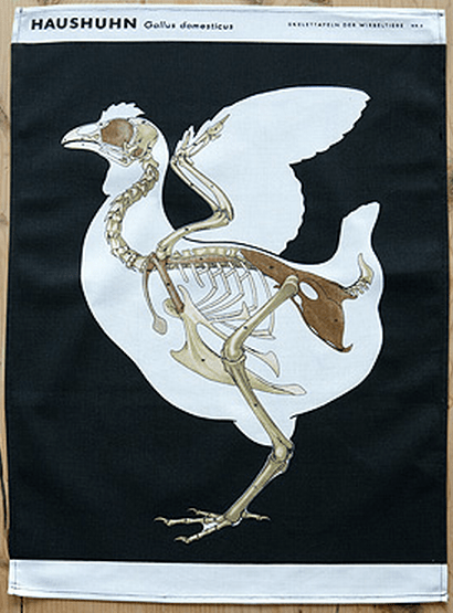 Chicken Anatomy Tea Towel