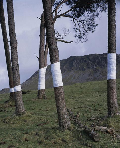 Tree, Line, by Zander Olsen