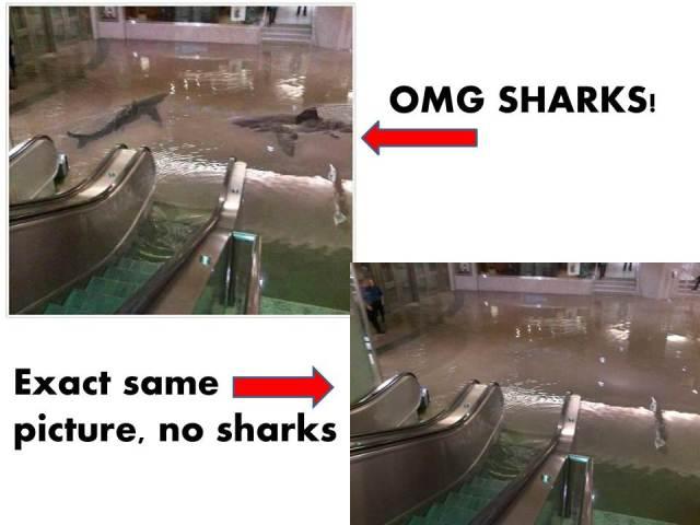 Fake shark photo