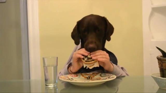 Ruff Dog Day Official Video by charlitabonita10
