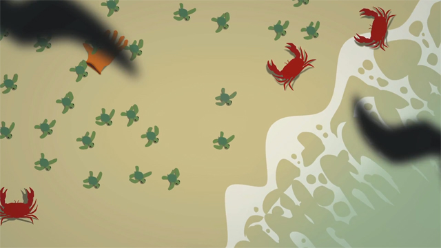 The Survival of the Sea Turtle by TED-Ed