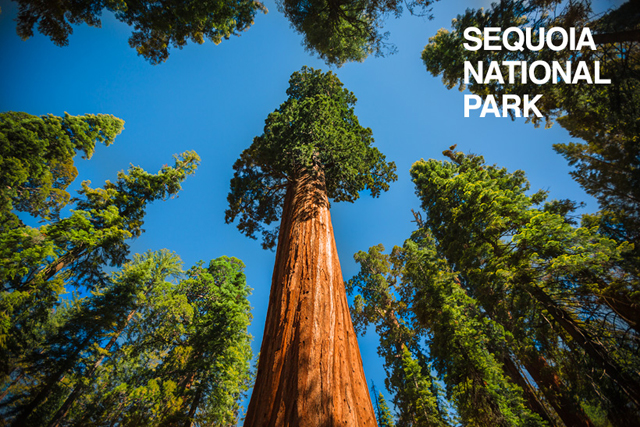 Sequoia National Park - USA Roadtrip - photo by Mike Matas