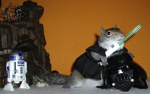 Squirrel Sugar Sugar Bush Squirrel is a