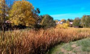 creek scene fall
