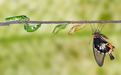 Kraft des Wandels: 7 + 1 Dinge, die du von Schmetterlingen lernen kannst