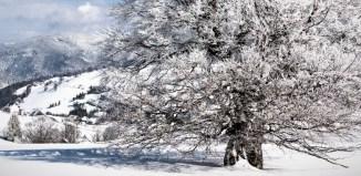 golf l'hiver