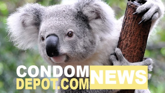 how to catch chlamydia from a koala