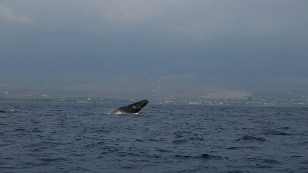 p1180544-mp4-photo-baleine