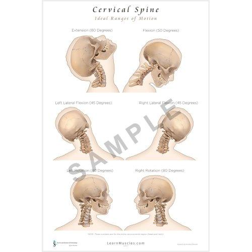 Medium Crop Of Picture Of Spine