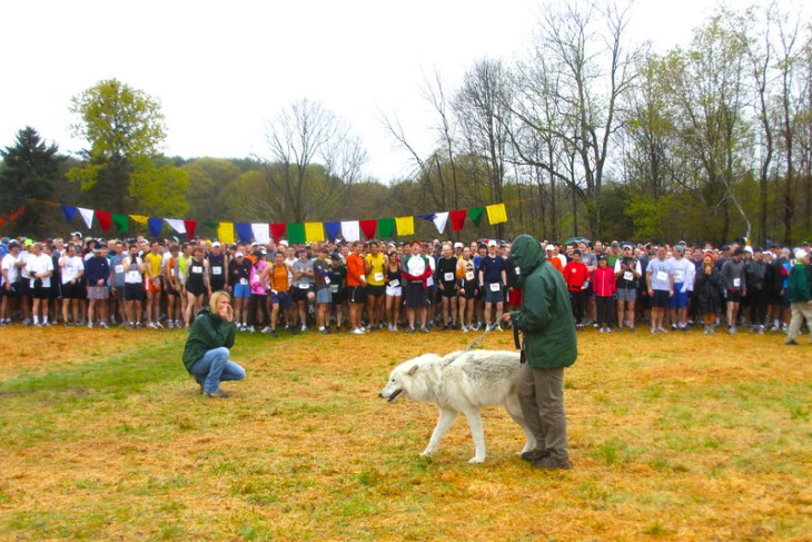 Atka the Wolf howls the runners to a ready position in 2010. Photo by Rob Cummings.