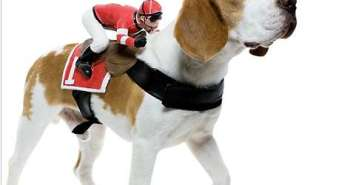 ride-on-dog-costumes