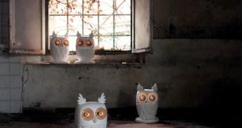 Owl Lampe