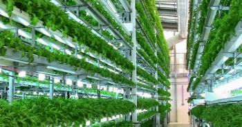 Veggie Factory ferme verticale robots