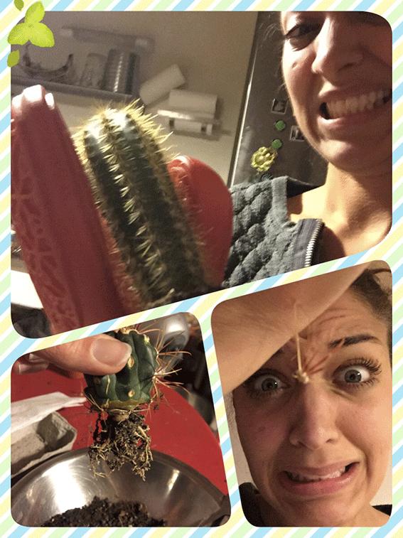DIY pour rempoter des cactus
