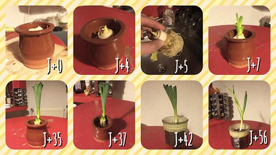 Comment faire pousser un poireau le corps la maison l - Comment cuisiner le poireau a la poele ...