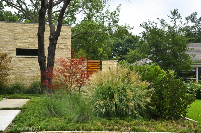 Ornamental Grasses in Texas