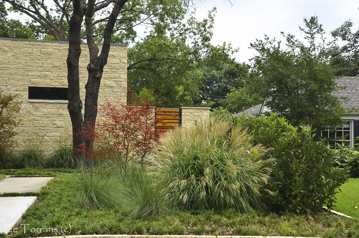 Ornamental Grasses in Texas