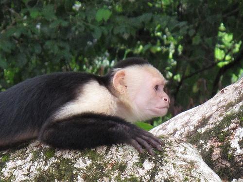 monkeyCostaRica
