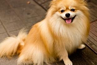 動物・ペット法務のイメージ