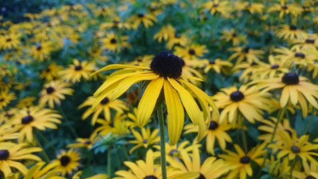 Z caego Wawelu najbardziej spodobay mi si kwiatki Taka sytuacjahellip
