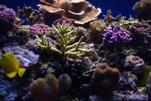 bel aquarium recifal 7334