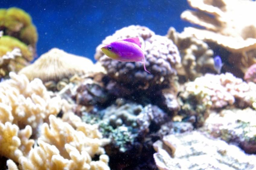 bel aquarium recifal 7338