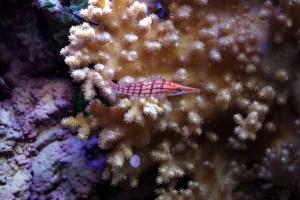 bel aquarium recifal 7348