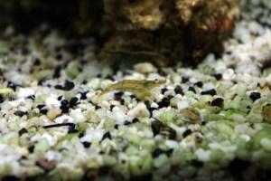 bel aquarium recifal 7349