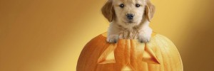 Halloween chiot dans citrouille