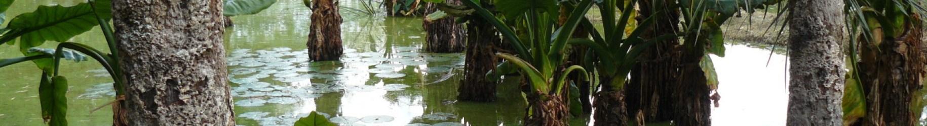 Mangrove - Madagascar