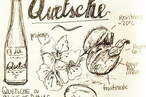 dessin-stylo-Quetsche-1l