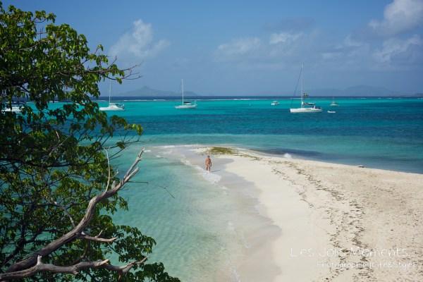 Tobago Cays 12