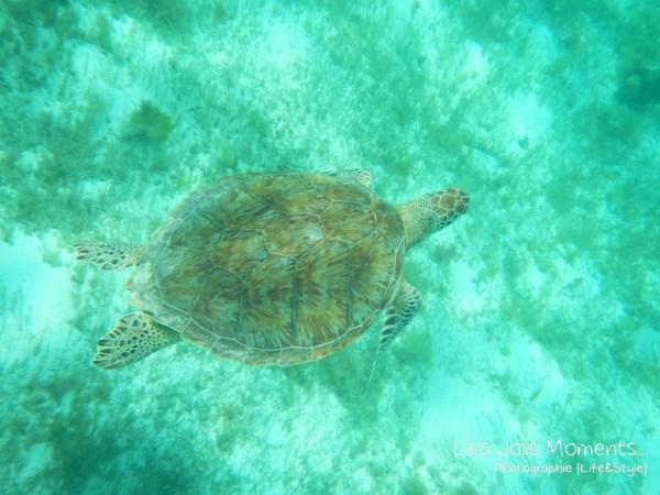 Tobago Cays 7