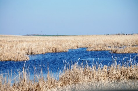 Hundreds of ponds line the roads in ND, like this one on ND Hwy 1