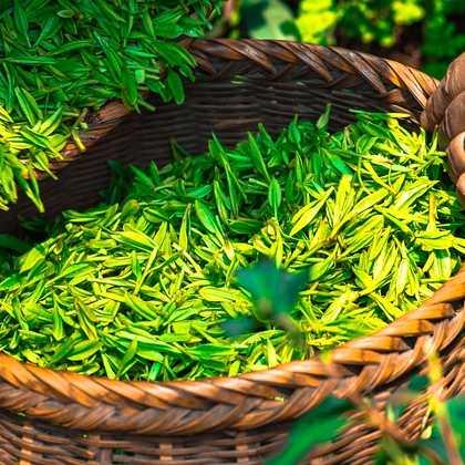 tea-420_420
