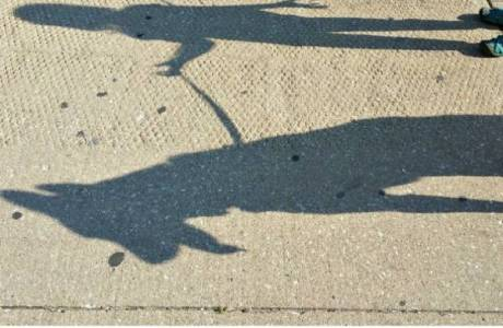 Help Your Kids Learn about Shadows with this Free Unit Study