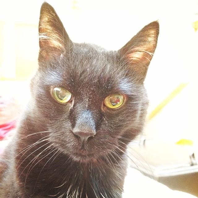 Zoggie is the dirties cat alive!